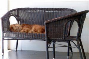Bloß keine schlafenden Hunde wecken!